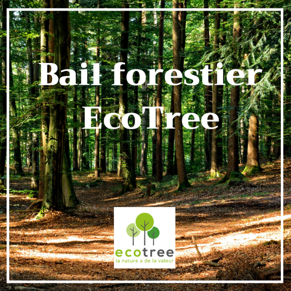 Bail forestier EcoTree