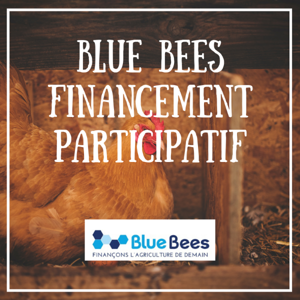 Financement participatif - Blue Bees