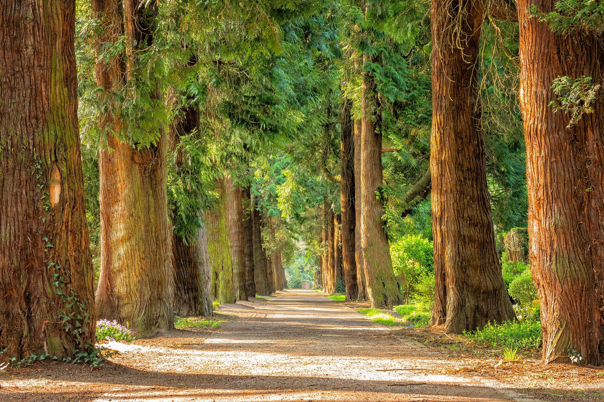 Choisir les essences d'arbre de son parc