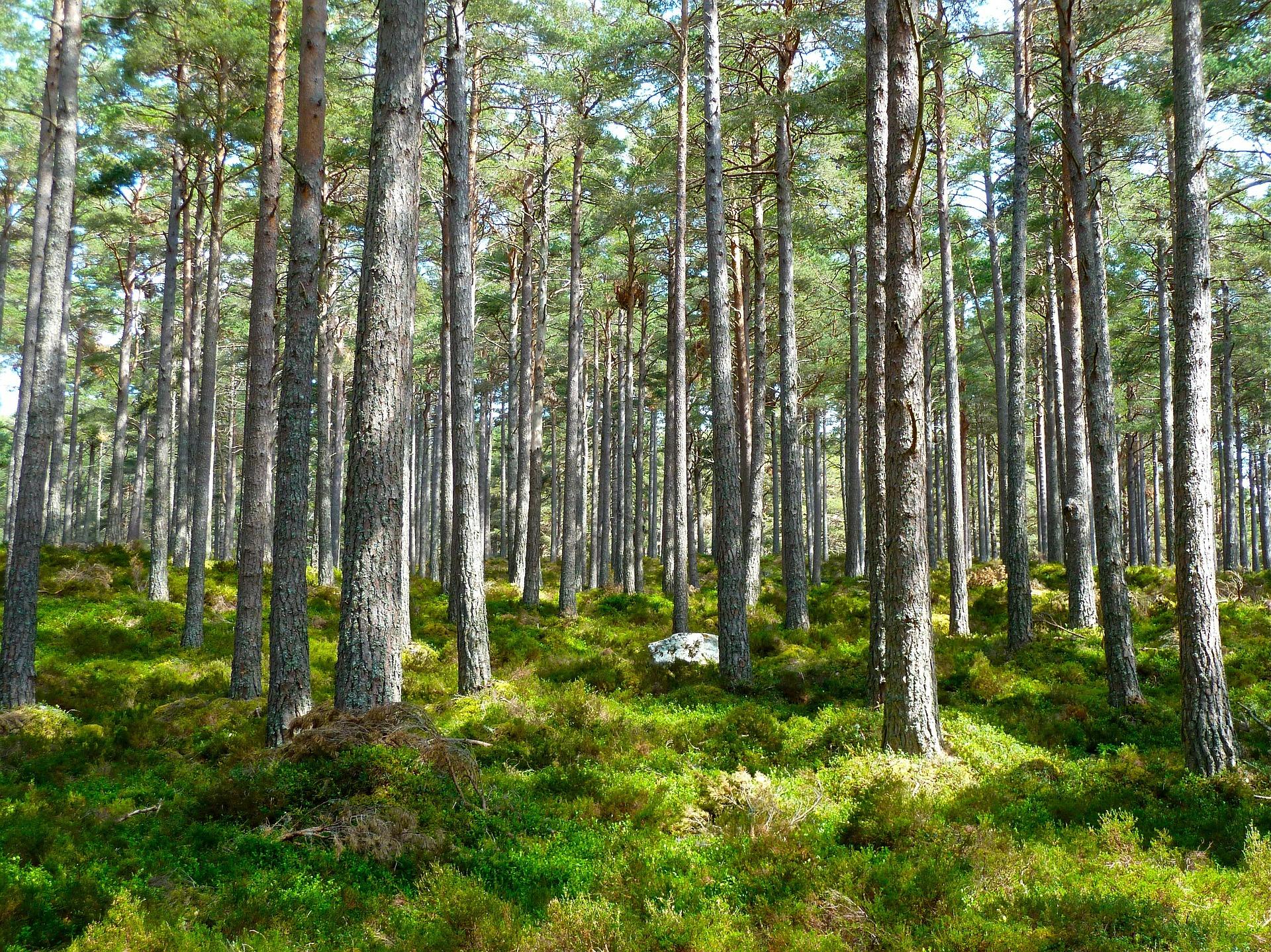 Gérer et optimiser son domaine forestier