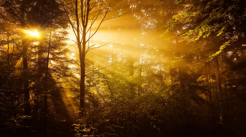 Valoriser la propriété forestière d'un domaine historique