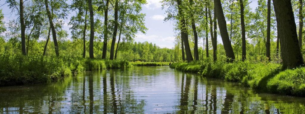 Une image contenant arbre, extérieur, eau, herbe  Description générée automatiquement