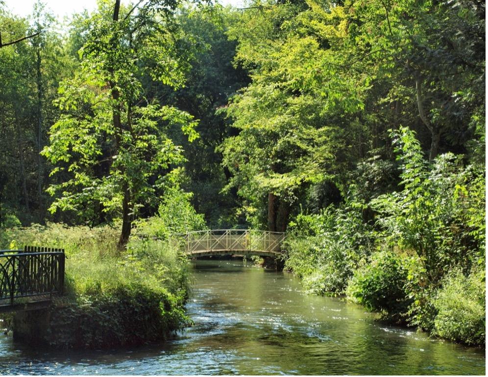 Une image contenant arbre, extérieur, eau, rivière  Description générée automatiquement